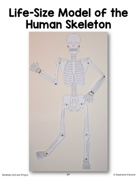 Skeleton Model Project and Activities