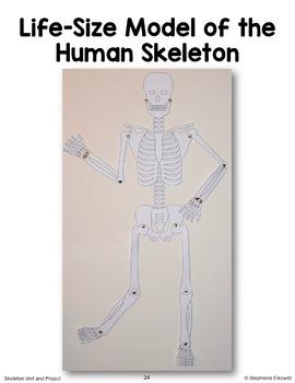 Skeletal System Life Size Skeleton Project