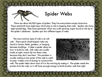 Spider Webs Reading and Make a Web  STEM Challenge