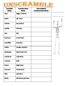 Halloween Science and Social Studies for Upper Grades: The Skeleton