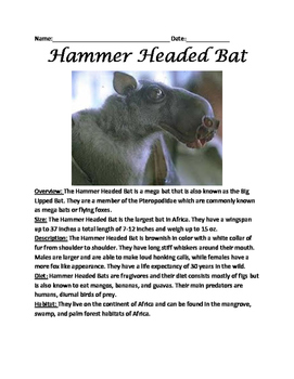 Hammer Headed Bat - Review Article Lesson with questions vocab facts