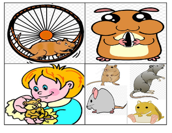 Hamster Pet Picture Match Cards (1st Grade Reading Level)