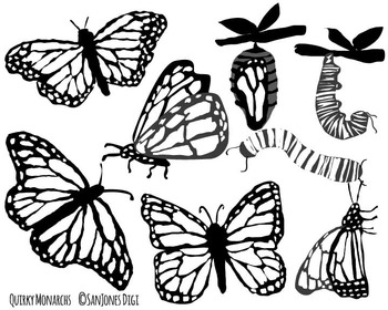 Hand Drawn Monarch Butterfly Stages Color and Black & White
