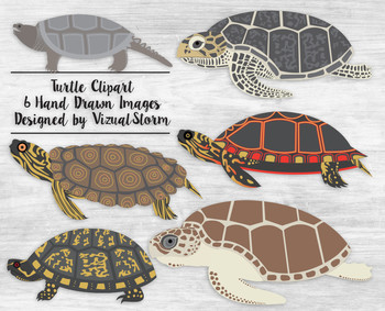 Hand Drawn Turtle Clipart Illustrations - 6 Detailed Sea Turtles and Tortoises