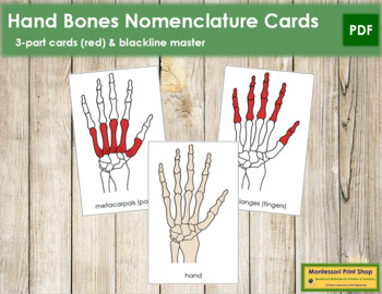 Hand Nomenclature Cards (Red)