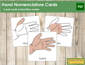 Hand Nomenclature (Simple) Cards