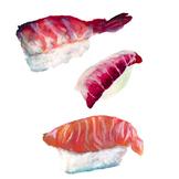 Hand Painted Nigiri Sushi Clip Art
