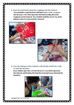 Hands-On Digestive System Human Body Lab