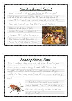 Handwriting Big Bundle! Amazing Animal Facts in D'Nealian Manuscript