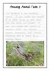 Handwriting Worksheet Set: Amazing Animal Facts in Foundation Cursive