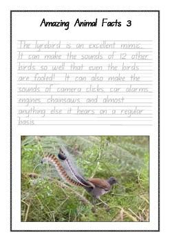 Handwriting Worksheet Set: Amazing Animal Facts in Foundation Manuscript