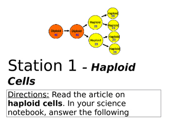 Haploid vs Diploid Cell Stations