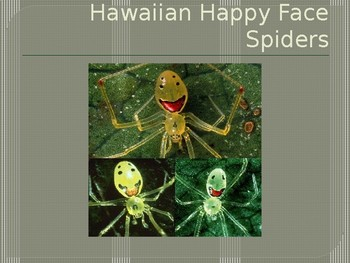 Happy Face Spiders Exemplify Animal Adaptations and Natural Selection