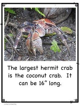 Happy Hermit Crabs!