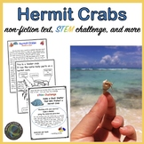 Happy Hermit Crabs!