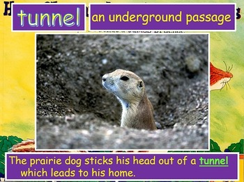Journeys 2014 Grade 2 How Chipmunk Got His Stripes PowerPoint