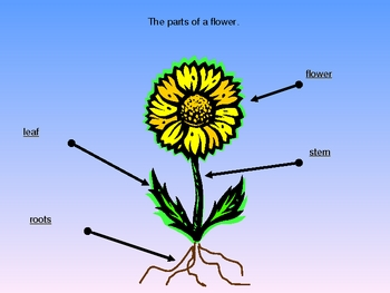 Harcourt Science Chapter 3 Plants Power point