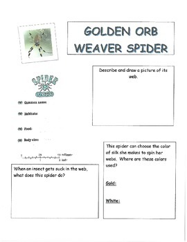 Harcourt Storytown~Grade 3~Lesson 27 Spiders and Their Webs