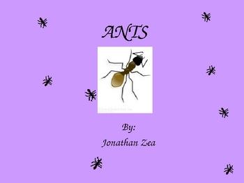 Harcourt Trophies 1st Grade Ants