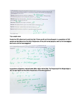 Hardy Weinberg Equation Worksheet with KEY