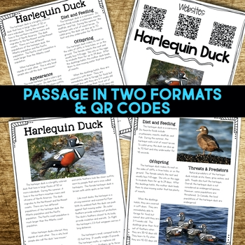Harlequin Duck Informational Article, QR Code Research & Fact Sort