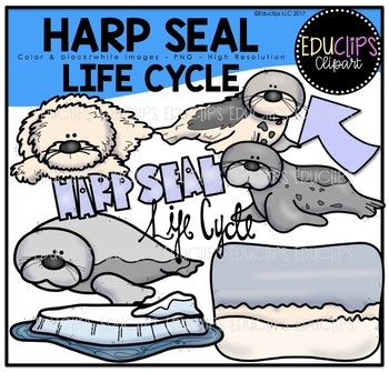 Harp Seal Life Cycle Clip Art Bundle {Educlips Clipart}