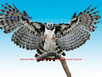 Harpy Eagle - Power Point - Information Facts Pictures Endangered