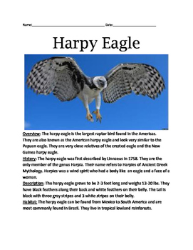 Harpy Eagle - Review Article Lesson Facts Questions Vocabulary