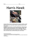 Harris Hawk - bird of prey review article lesson facts information questions