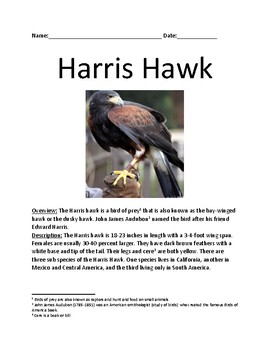 Harris Hawk - bird of prey review article lesson facts inf