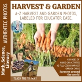Harvest Activities -Math and Science