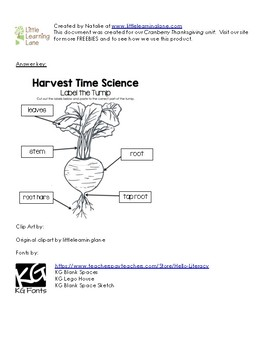Harvest Time Science - Label the Turnip Worksheet