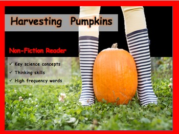 Harvesting Pumpkins