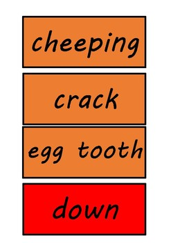 Hatching Chickens Sight Words Vocabulary