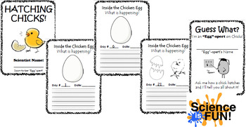 Hatching Chicks - 21 Days - What is Happening Packet