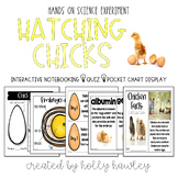 Hatching Chicks: Chick Life Cycle Science Experiment