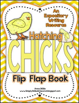 Hatching Chicks