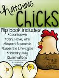 Hatching Chicks Flip-book