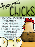 Hatching Chicks Flip-book