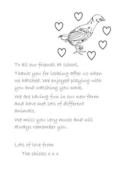 Hatching Chicks in class Farewell Letter