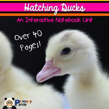 Hatching Duck Eggs: An Interactive Notebook Unit