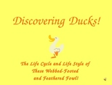 Hatching Ducks Powerpoint