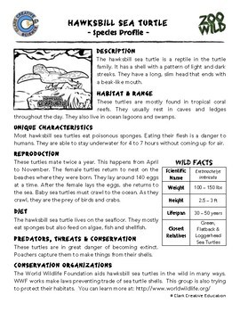 Hawksbill Sea Turtle -- 10 Resources -- Coloring Pages, Reading & Activities