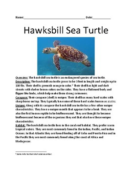 Hawksbill Sea Turtle - endangered species - lesson article information questions