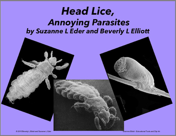 Head Lice, Annoying Parasites - with Scanning Electron Microscope Images