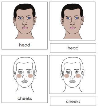 Head Nomenclature Cards
