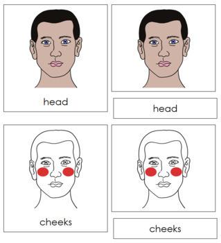Head Nomenclature Cards (Red)