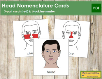 Head Nomenclature Cards (Red)