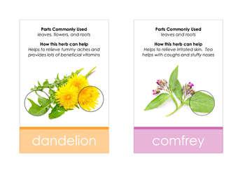 Healing Herbs Identification Cards- Montessori