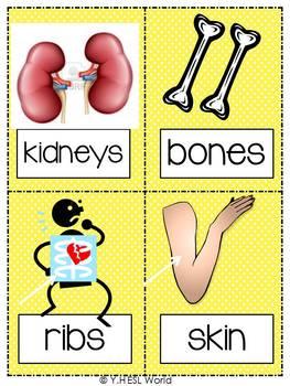 Health & Body {44 Flashcards & Games} ESL Adults & Grades 4-6